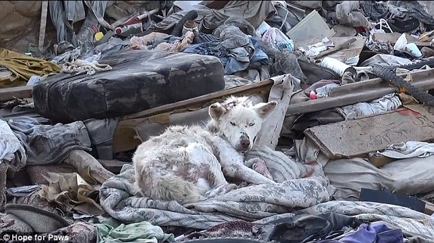 Abandoned dog on a trash heap
