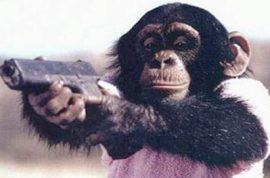 Adam Lanza told radio: face eating chimp is like a teenager mall shooter