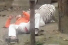 Yang Jinhai, depressed factory worker offers himself to Chinese zoo white tigers.