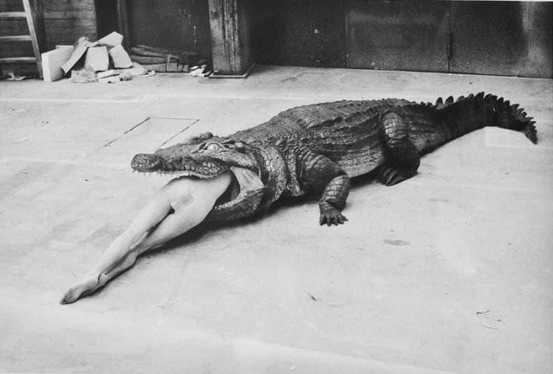 eaten alive by a crocodile