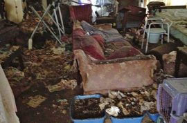 130 cats rescued from home of 60 year old twin sisters. Feces 4ft deep
