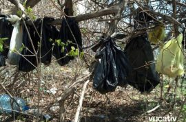 How did 30 dead cats come to be hanging from a tree in an abandoned NY lot?