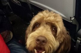 US Airways flight 598 emergency lands after service dog poops in aisle