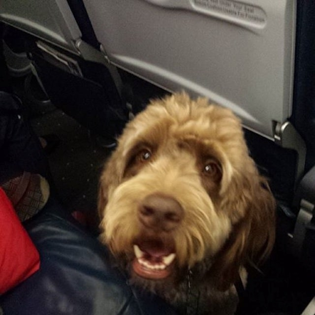 US Airways flight 598 emergency lands after service dog poops