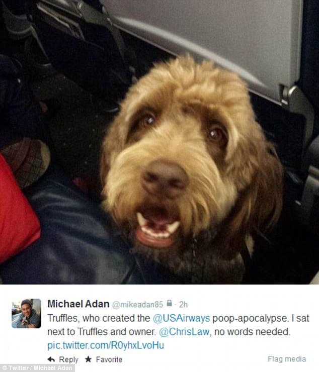 US Airways flight 598 emergency lands after service dog poops
