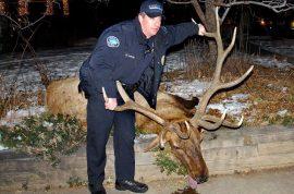 Sam Carter Ex Boulder Colorado cop lands 6 years jail for killing prized elk.