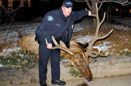 Sam Carter Ex Boulder Colorado cop lands 6 years jail for killing prized elk.