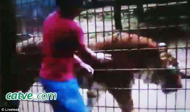 Eleven year old boy hand bitten off by tiger at Brazilian zoo