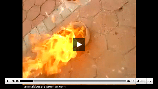 Facebook refuses to remove video of kitten doused in gas