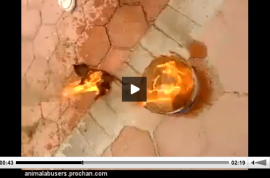 (NSFW) Why Facebook refuses to remove video of kitten doused in gas and set on fire