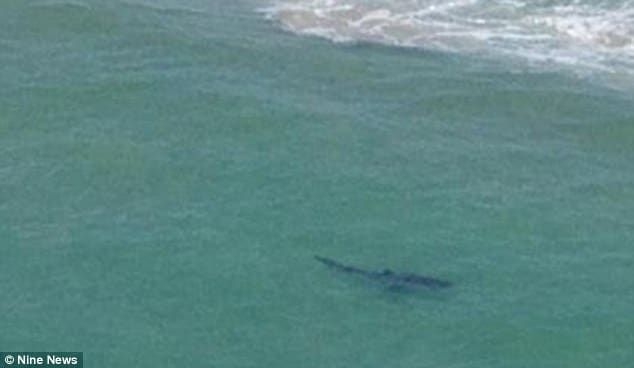 Great white shark attack off Byron Bay