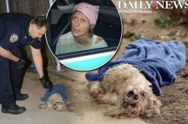 Brooklyn dog dies after being tossed down trash chute. Was heard crying.