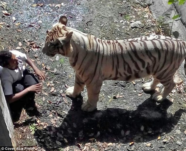 White tiger mauls drunk Indian man at New Delhi zoo
