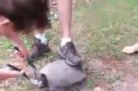 (NSFW) Catrina Shears posts video of her brother hacksawing turtle's head off