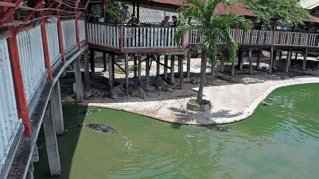 Thai woman commits suicide by leaping into crocodile pond