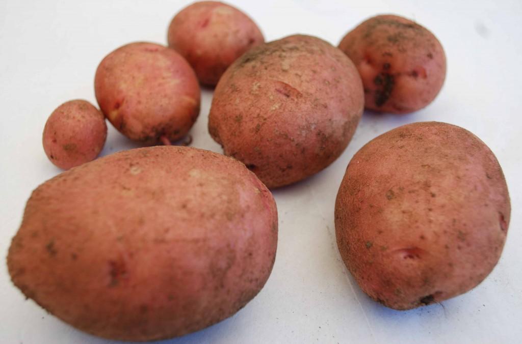 Woman uses potato as contraceptive
