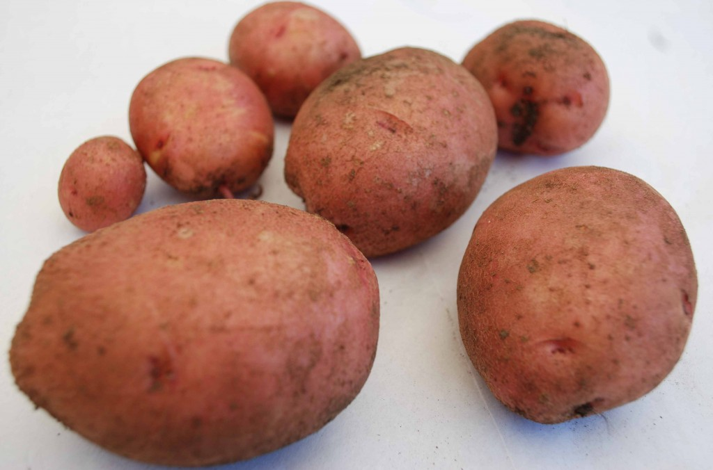 Woman uses potato as contraceptive