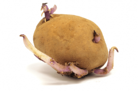Woman uses potato as contraceptive hospitalized after it grows roots
