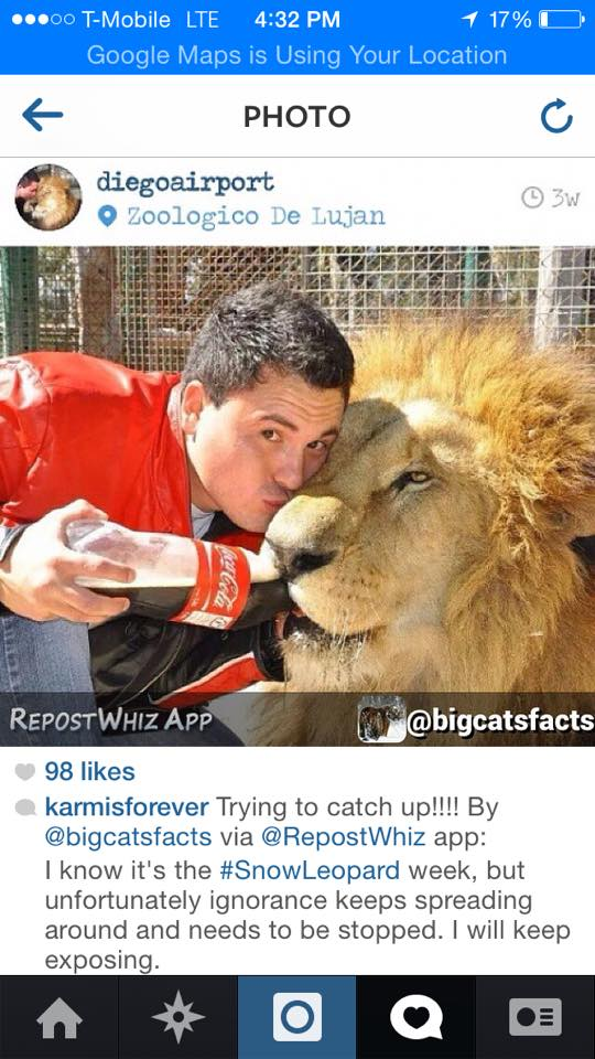 Argentinian zoo drugging lions