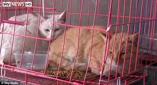 1000 stolen Chinese pet cats