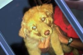 Otis McCulley shoots his neighbor's puppy cause he feared it would poop in his yard
