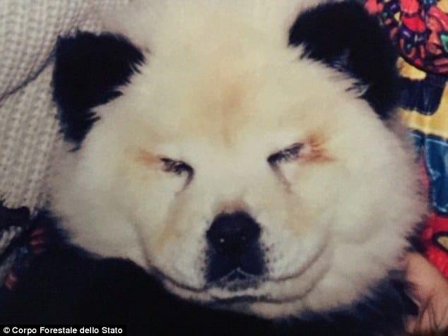 Dogs as pandas