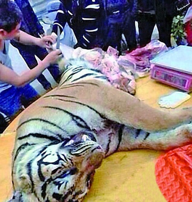 Chinese businessman jailed for eating three tigers