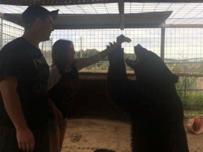 woman has arm mauled by 400 pound Florida black bear