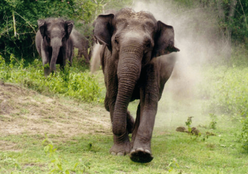 Elephant tramples married couple to death