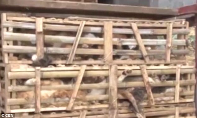 Thousands of cats crushed to death by Vietnam dumpster truck