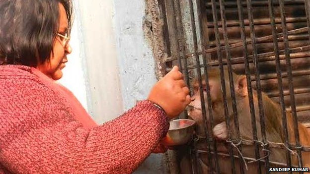 Wealthy Indian couple leave monkey inheritance