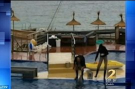 Spanish Dolphin trainer, Jose Luis Barbero dead after video of him kicking dolphin surfaces.