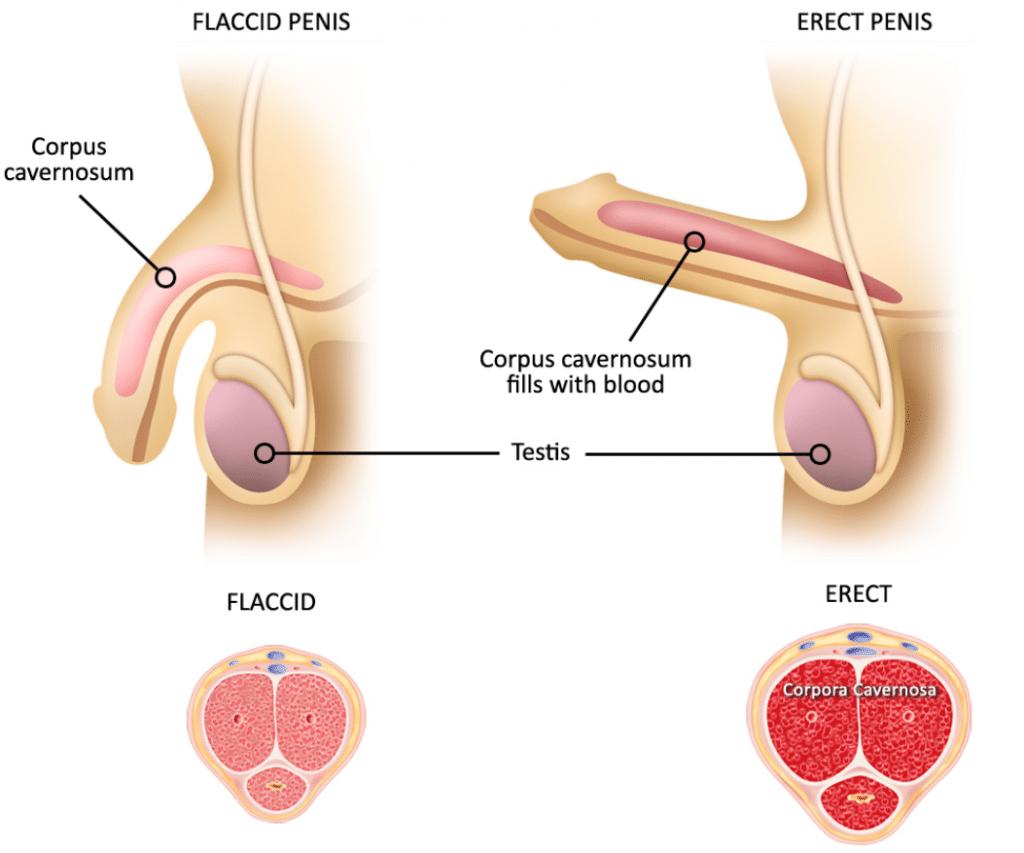 Man breaks penis during sex