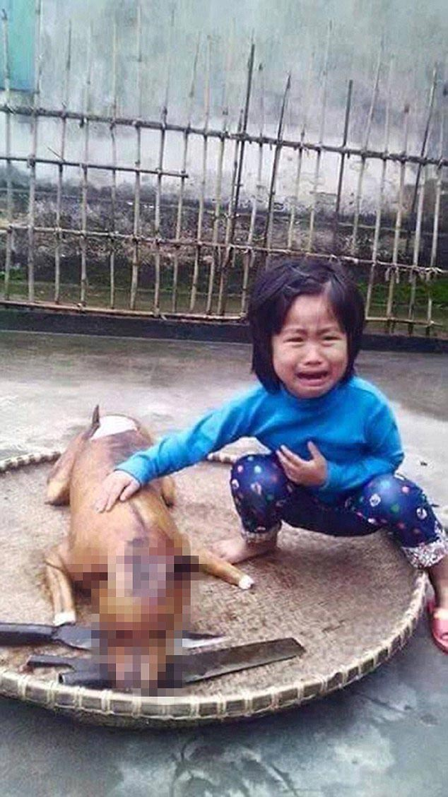 Five year old Vietnamese girl finds her missing dog