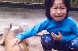 Five year old Vietnamese girl finds her missing dog sold at a ready cooked stall