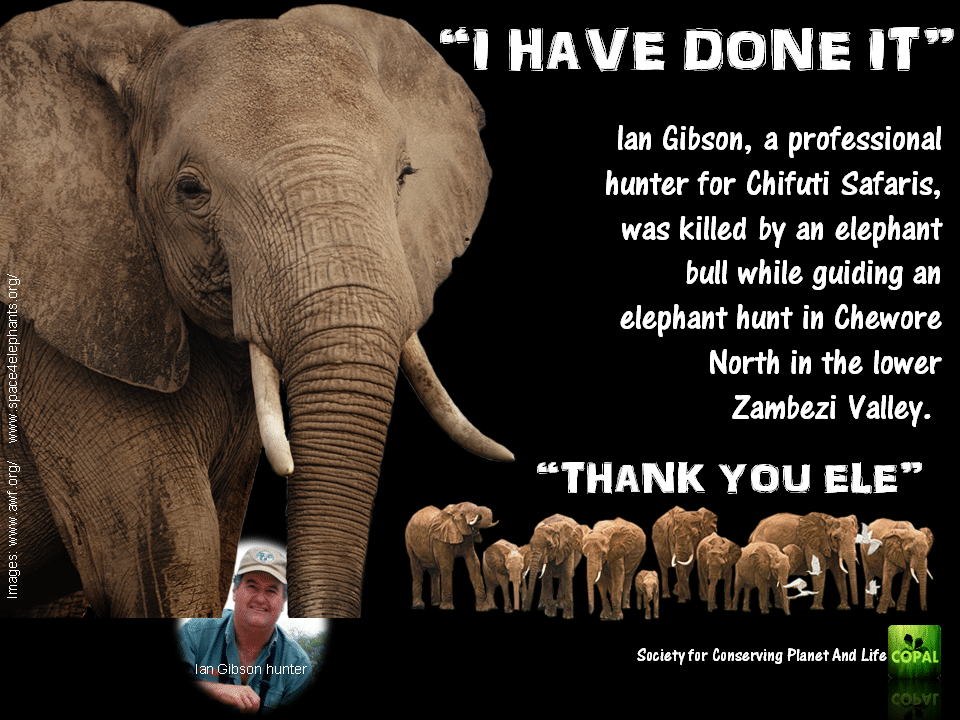 Ian Gibson trampled by elephant