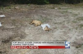 Sgt Al Richard Charlie, Fort Bragg soldier charged with slitting throats of two dogs cause they barked at him