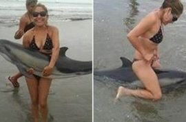 The Lima Dolphin incident. Petition to prosecute couple straddling beached dolphin mounts