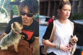 Johnny Depp faces ten years jail for smuggling dogs to Australia.