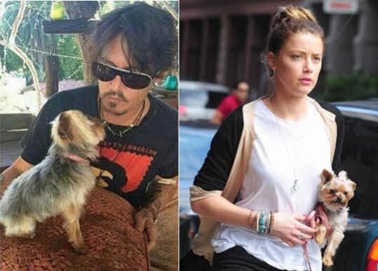 Johnny Depp dogs