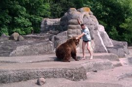 Man enters Polish zoo bear enclosure, smacks bear over its head, lucky to still be alive.