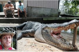 Tommie Woodward alligator killed by vigilantes: Body parts discovered