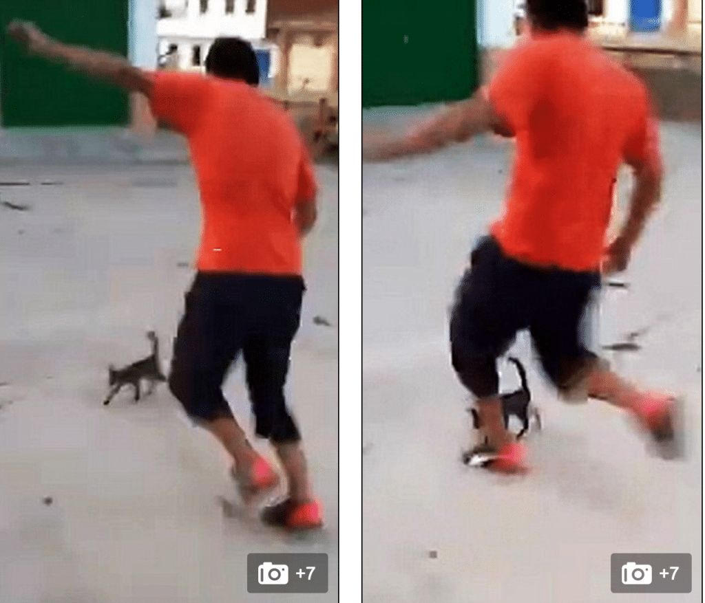 Spanish cat kicked dies
