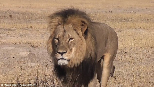 Walter Palmer Cecil lion