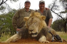 Walter Palmer Cecil lion hunter on the run. Closes dentist as internet explodes
