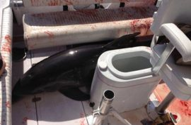 Dolphin leaps on board Dirk and Chrissie Frickman boat: Broke her ankles, blood everywhere