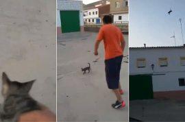 Video: Spanish cat kicked dies. No arrests pending.