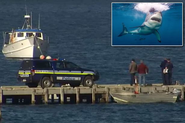 Tasmania shark attack