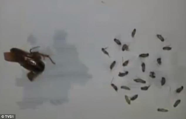 Chinese man discovers cockroach living in his ear