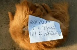 Pomeranian dog beaten to death with note: 'We beat it 2 Death lol!'